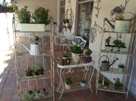 capetown, wine, farms, rijks, morgansvlei, grapevine, tulbagh, tea, cups, mirrors, noughat